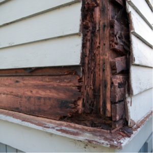 Costly Termite Damage